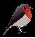 Robin GmbH